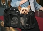 Review of the Sherpa Original Deluxe Pet Carrier