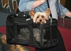Best Airline Pet Carrier