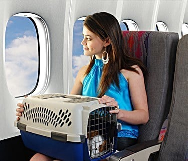 Airline approved pet carrier top 10 picks for flight for Airlines that allow dogs in cabin