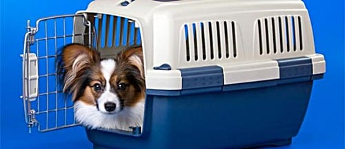Airline Approved In-Cabin Pet Carrier