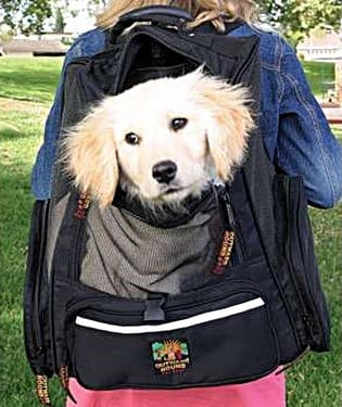 Dog Backpack Carrier