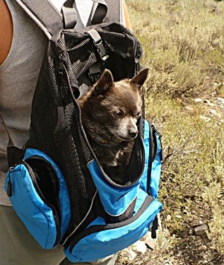 Buying the Best Dog Backpack Carrier Has Never Been Easier