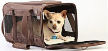 What's the Best Small Dog Carry-on Bag?