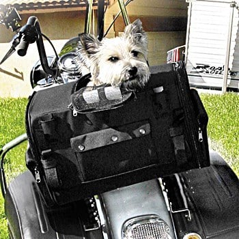 Motorcyle Front Harness For Small Dogs