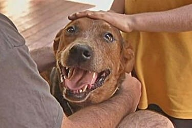 How to prevent Travel Anxiety in Dogs