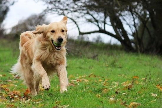 dog running around erratically