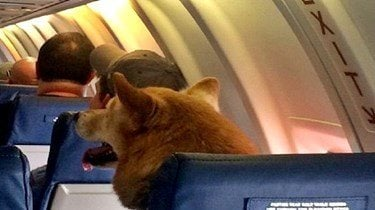 Common dog travel anxiety symptoms