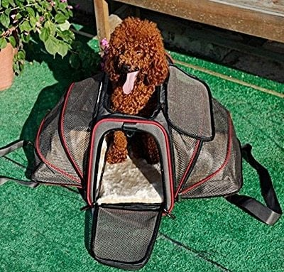 Airline Approved Expandable Pet Carrier by Pet Peppy