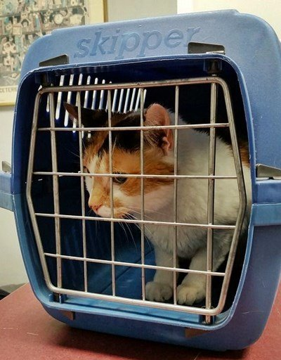How to Crate Train a Cat or Kitten