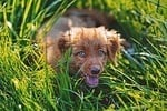 should you let your dog eat grass?