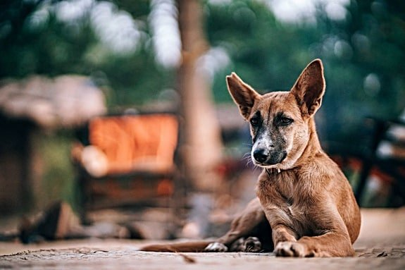 How do I stop my dog from chewing his feet?