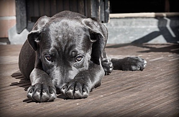 10 Reasons Why Your Dog is Afraid to Go Outside Suddenly