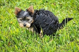 Does My Dog Have Worms? Essential Information About Worming!
