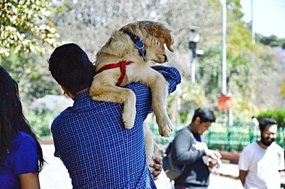 carregando cães em escadas