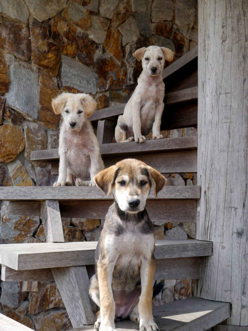 three puppies sitting on a staircase