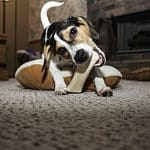 how to stop a dog from chewing everything