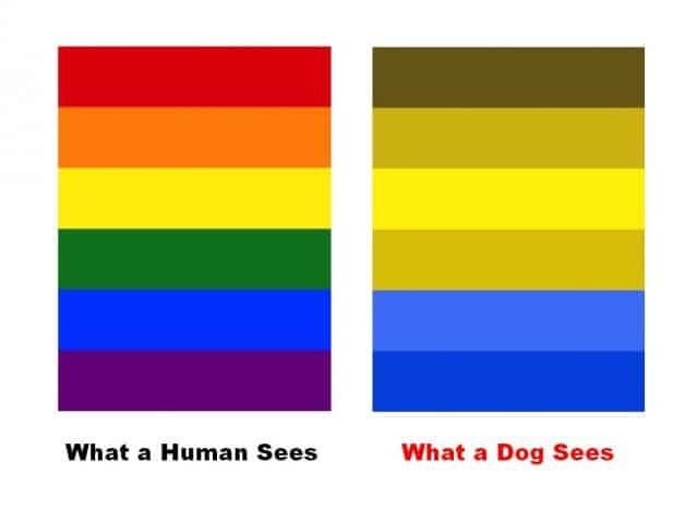 Color charts comparing what a human sees to what a dog sees.