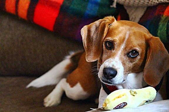 How to Stop Your Dog Chewing Furniture When Left Alone