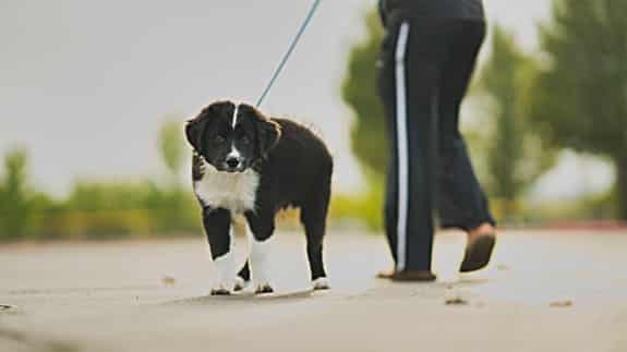 how to stop my dog barking when out walking