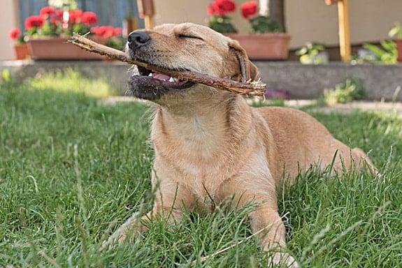 homemade dog repellent for furniture