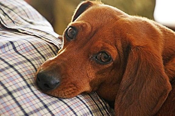 What's a good dog nose balm?