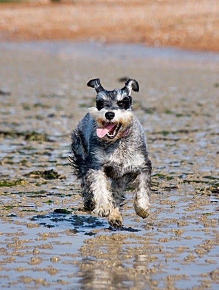 hyperactive dog symptoms