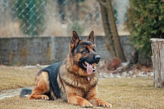 will a dog bite heal on its own without treatment