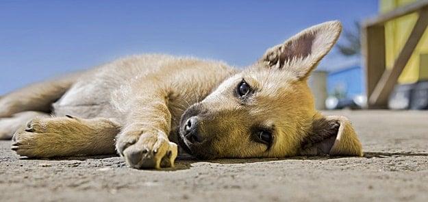 my dog seems sad and tired