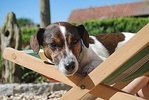 best size crate for Jack Russell