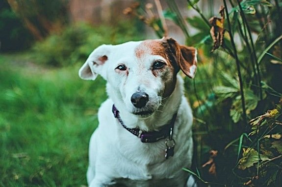 how to soothe nettle stings in dogs