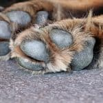 what does salt do to a dog's paws