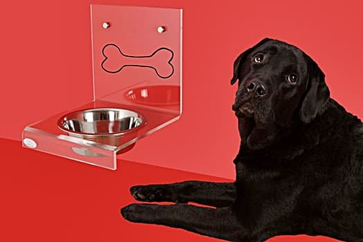 Dog Scared Of Stainless Steel Bowl