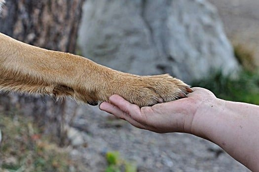 why do dogs like to hold hands?