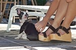 Why Dogs Lie on your feet