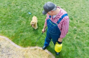 dog eating grass sprayed with roundup herbicide