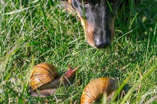 My dog swallowed a slug