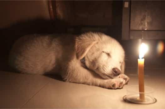 dog ate birthday candle