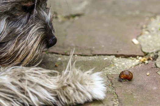 Dog looking at a slug