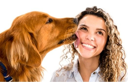 What is a Dog Saying When It Licks You?