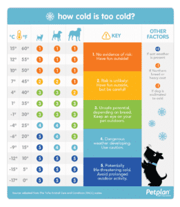 Chart showing outdoor temperatures that dog can tolerate. Below 20 F / -6C it can be life threatening for your dog
