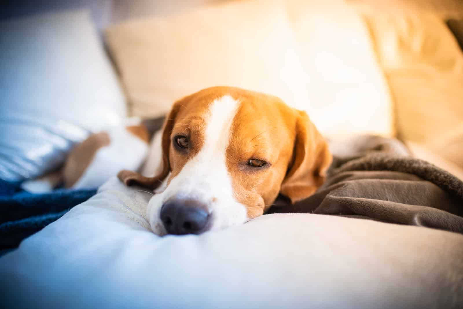 do dogs get sad when you leave them?