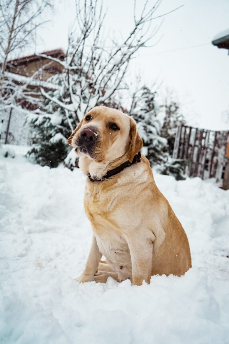 How To Handle Cold Weather With Your Dog