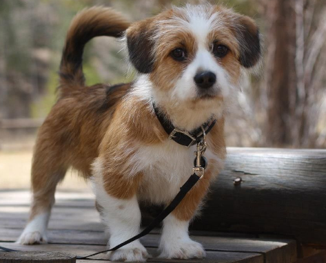 The 10 Best Mixed Dog Breeds For Apartments