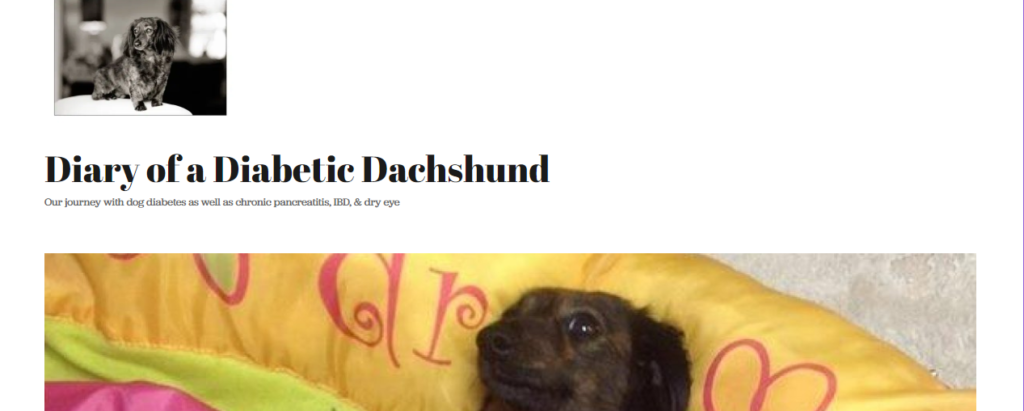Best Blogs for Dachshund Owners Diary of a Diabetic Dachshund