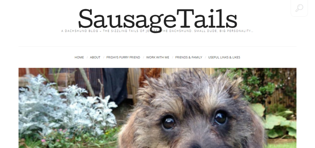 Best Blogs for Dachshund Owners Sausage Tails