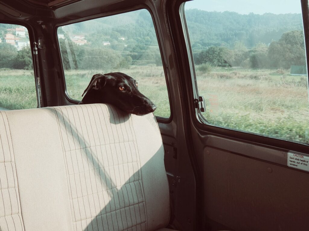 Problems With Dogs in a Car