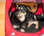 The perfect pet carrier for every breed of dog