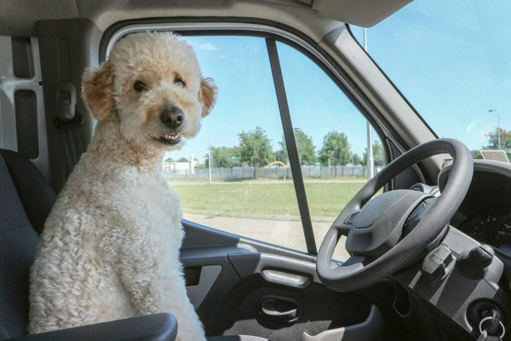 Are There Dog Friendly Ubers