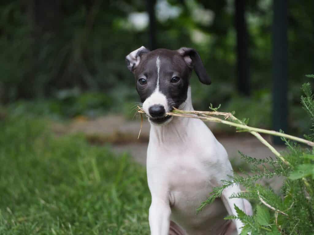 greyhound apartment dog bark