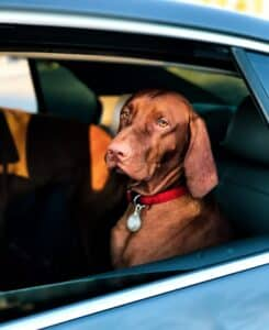 Should you or Shouldn't you Leave a Pet in Your RV